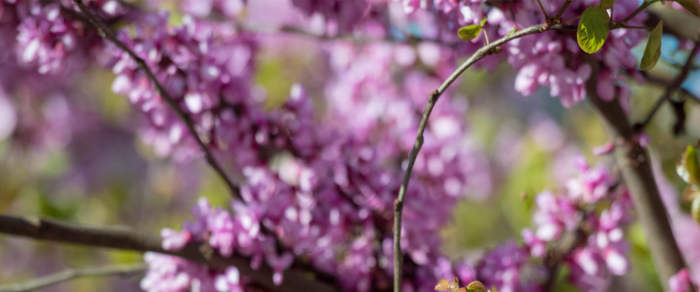 banner_purple_flowers