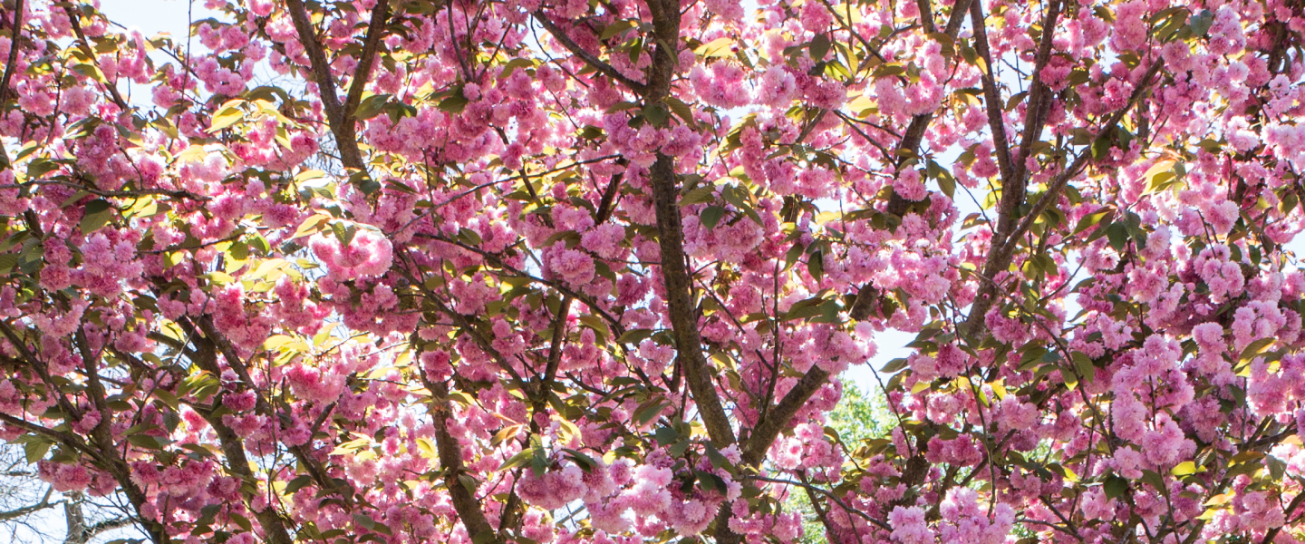 banner_pink_flowers