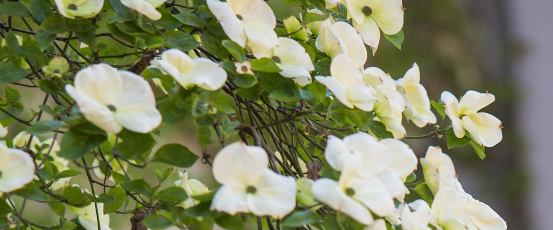 banner_flower_white