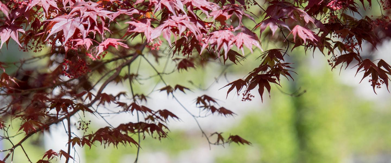 banner_leaves