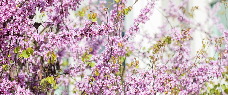 banner_pink_tree