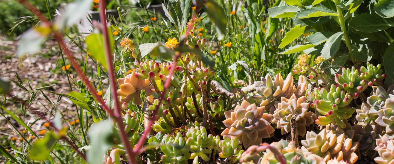banner_plants